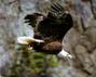 #22 Eagle